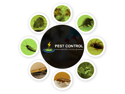 Pest Control Marrickville
